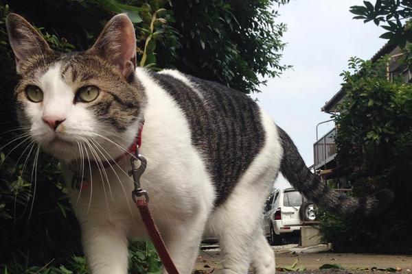El gato un compañero diferente... paseos con el gato
