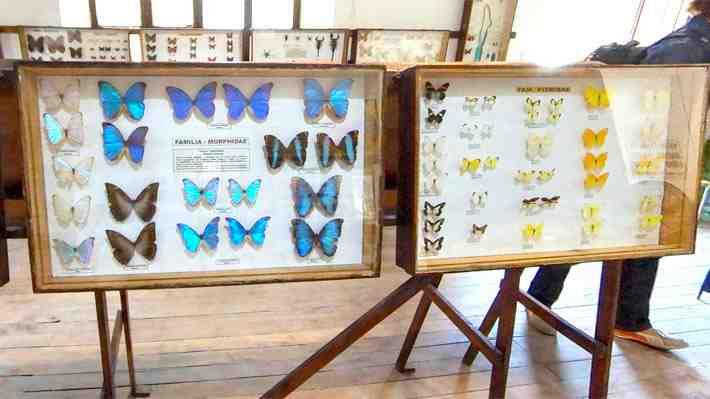 Visita el Museo Entomológico de Vicuña