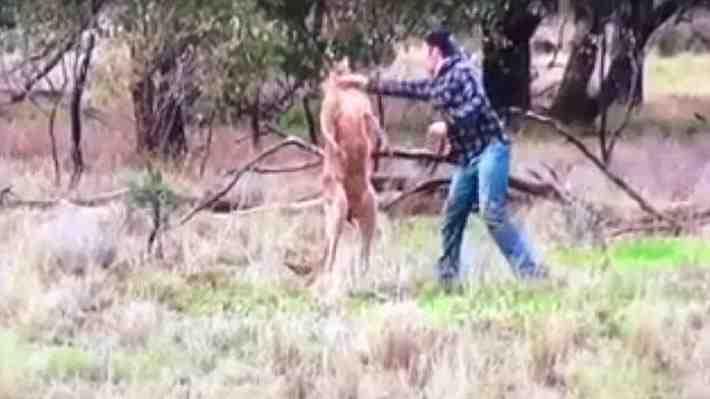 Revelan la verdadera historia del video en el que un hombre golpea a un canguro para salvar a su perro