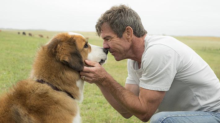 Denuncian crueldad animal en película sobre el emotivo