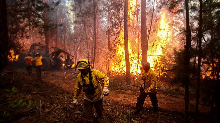 Revisa la situación de los incendios forestales que están activos en el país