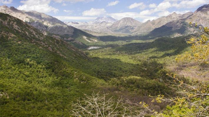 La flora y fauna después del incendio: El desafío de la restauración ecológica
