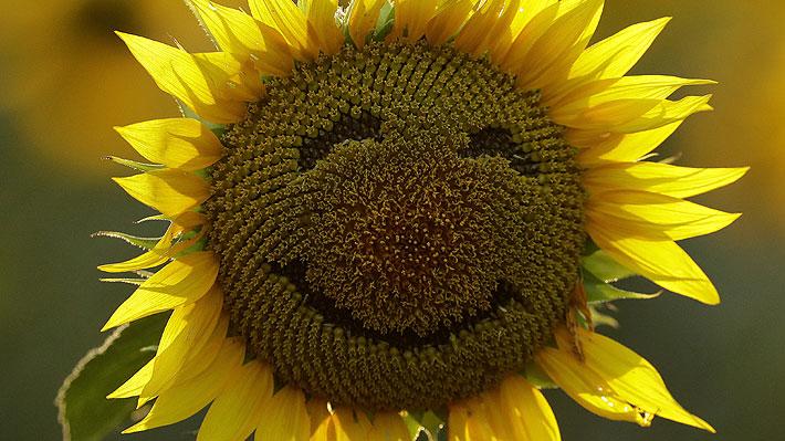 Chile es el país más feliz de Sudamérica: conoce qué nación lidera el nuevo ranking a nivel mundial
