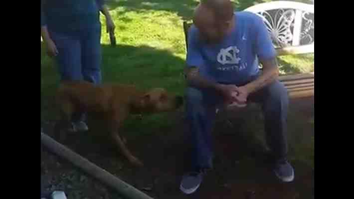 VIDEO: Hombre volvió a su casa tras pasar 5 semanas en el hospital y su perro le dio una inesperada bienvenida