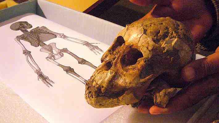 Restos de hace 3,3 millones de años dan claves de la evolución humana. ¡Entra y comenta!