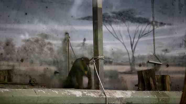 A un año de su cierre, zoológico de Buenos Aires mantiene a sus animales enjaulados