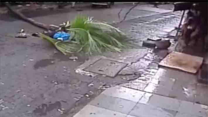 Presentadora de televisión india muere tras impactante accidente con una palmera