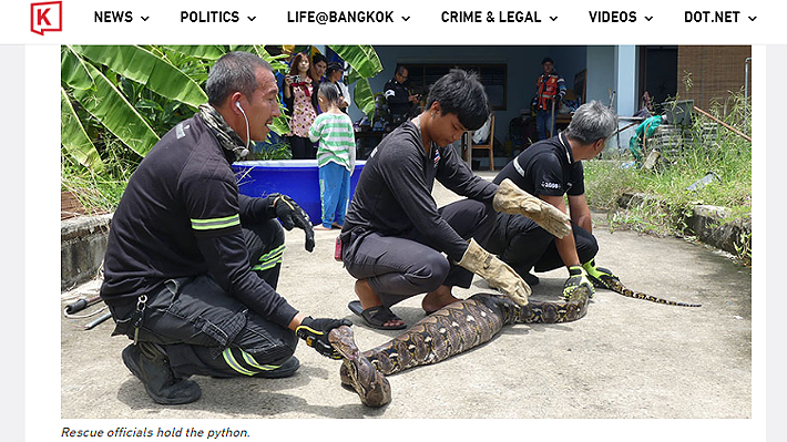 Pitón de cinco metros se tragó un gato entero en Tailandia: la dueña del felino no pudo salvarlo