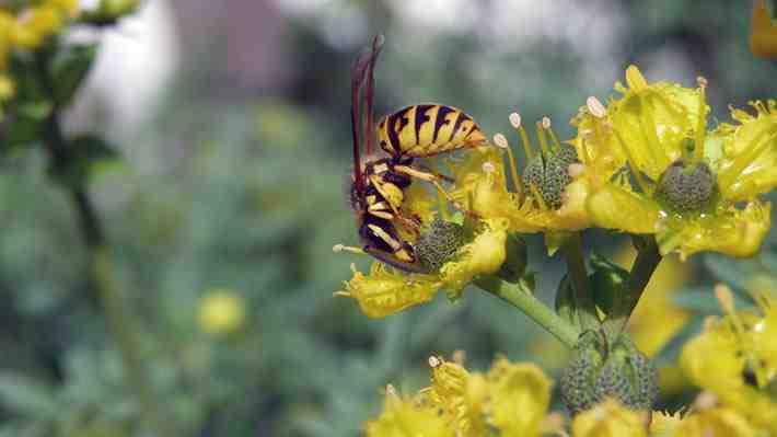 Siete especies exóticas invasoras generan pérdidas por casi US$90 millones al año. ¿Cómo lo ves?