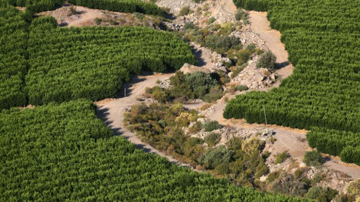 """Crisis del agua en Petorca:  """"Los requerimientos hídricos no se condicen con la disponibilidad"""""""