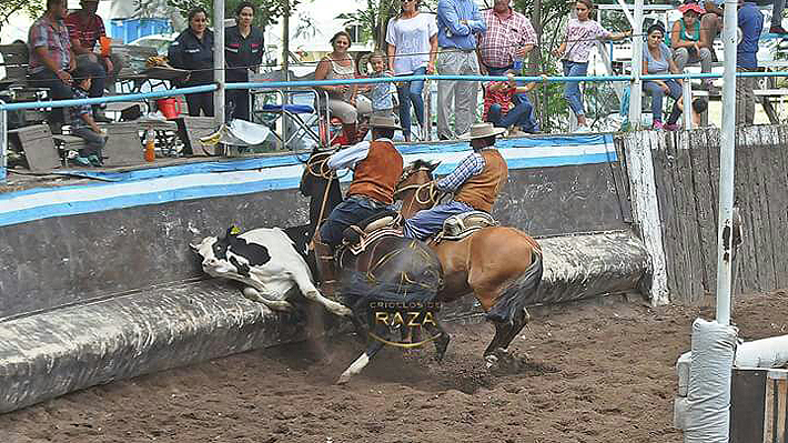 Rodeo: Jinetes argentinos competirán por segundo año consecutivo en el Champion