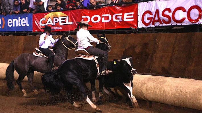 Contraloría reconoce al rodeo como un deporte y anula ordenanza de Recoleta que lo prohibía
