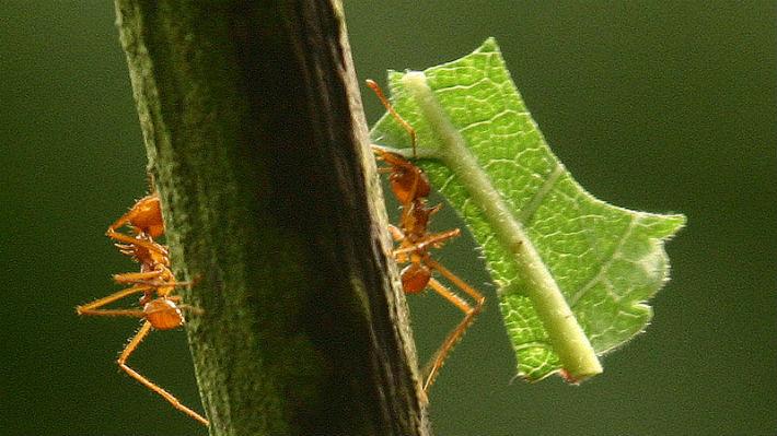 ¿Cómo se ve una hormiga bajo el microscopio? Una extraña imagen muestra la cara de una