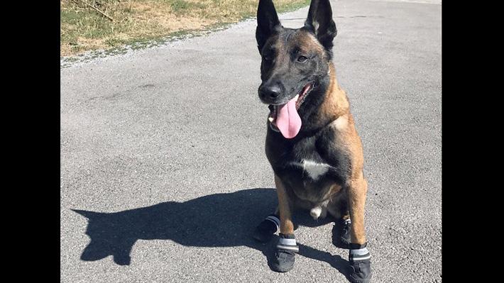Zapatillas para los perros policía