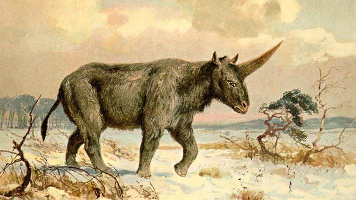 ¿Los unicornios realmente existieron? Un fósil demuestra que estos animales habitaron hasta hace sólo 29 mil años