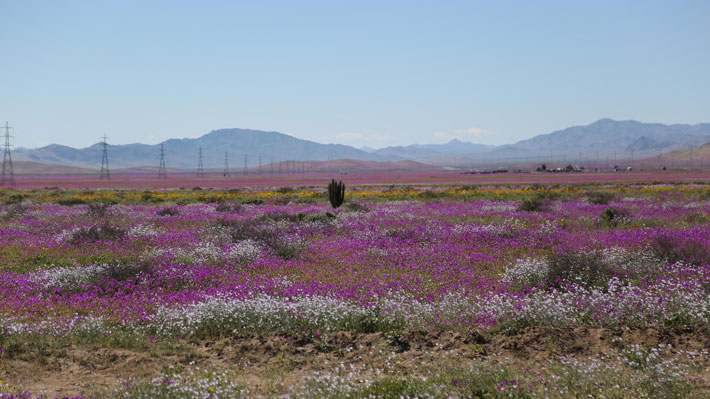 Chile se consagra tetracampeón como líder de turismo aventura en los