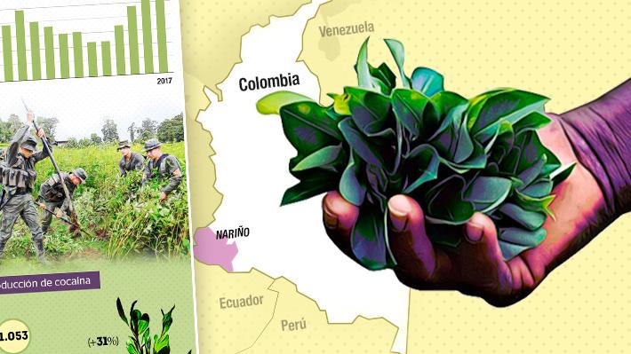 Más de 171 mil hectáreas en 2017: El preocupante incremento de los cultivos ilícitos de coca en Colombia