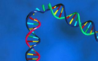 Edición genética: Cómo funciona la aclamada y pionera técnica