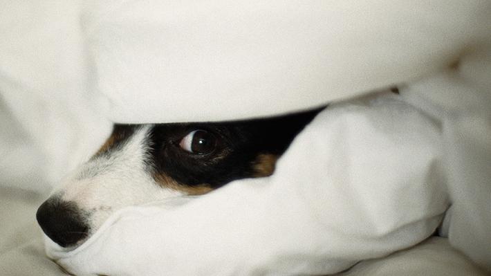 Blog de mascotas: Consejos para cuidar a perros y gatos durante las fiestas de fin de año