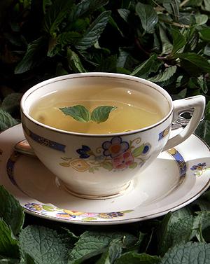 Como hacer el te de boldo para adelgazar testimonios
