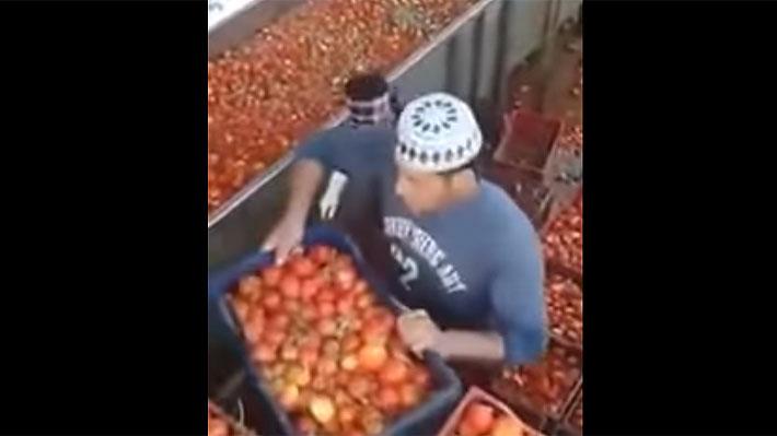 Acusan a popular marca estadounidense de usar tomates