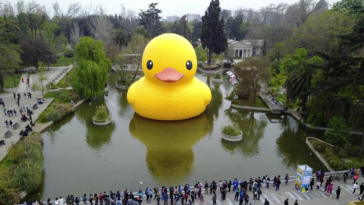 """¿Es el """"Pato de Hule"""" una obra de arte? Expertos chilenos contrastan visiones"""