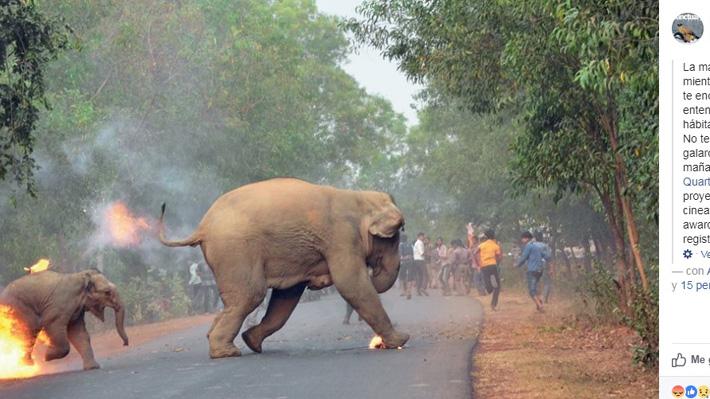La dramática historia tras la imagen de un elefante en llamas que ganó un concurso de fotografía en India