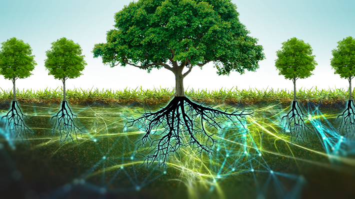 Suzanne Simard: Los árboles se comunican entre ellos y alertan de peligros