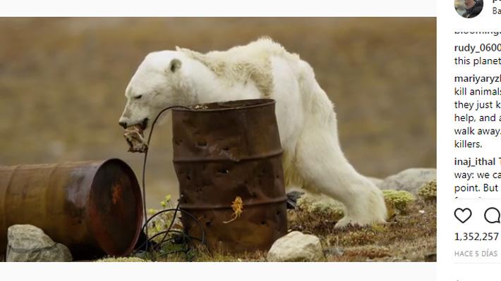Desgarradoras imágenes: Grupo conservacionista capta los últimos momentos de un oso polar muriendo de hambre