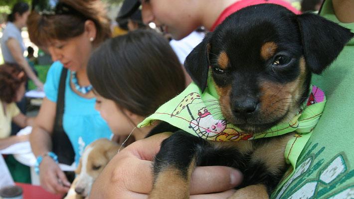 Diez claves para entender el Registro Nacional de Tenencia Responsable de Mascotas