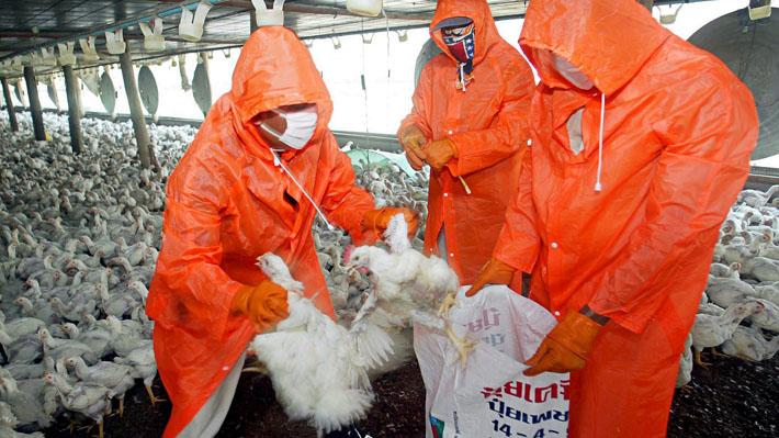 México cierra dos focos de influenza aviar en el centro del país