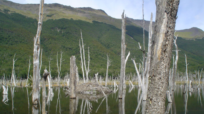 Experto chileno advierte sobre los riesgos que enfrenta la biodiversidad en el territorio nacional