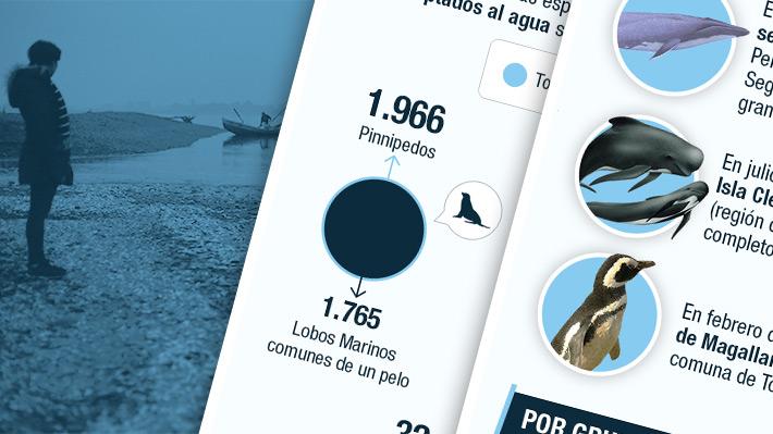 En su mayoría lobos, pingüinos y ballenas: Los animales que varan en las costas de Chile