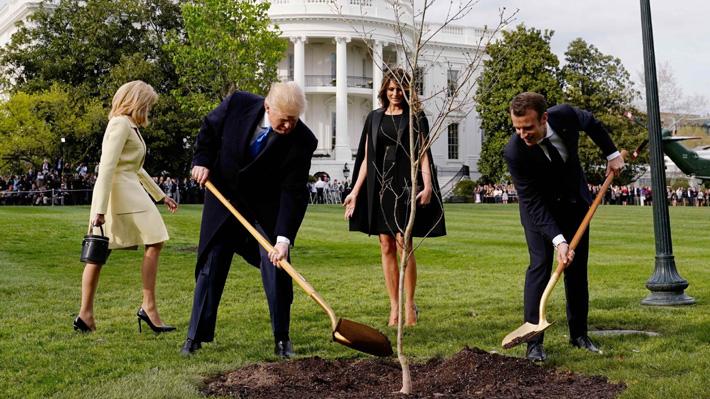 """¿Por qué """"desapareció"""" el árbol que plantaron Donald Trump y Emmanuel Macron en los jardines de la Casablanca?"""