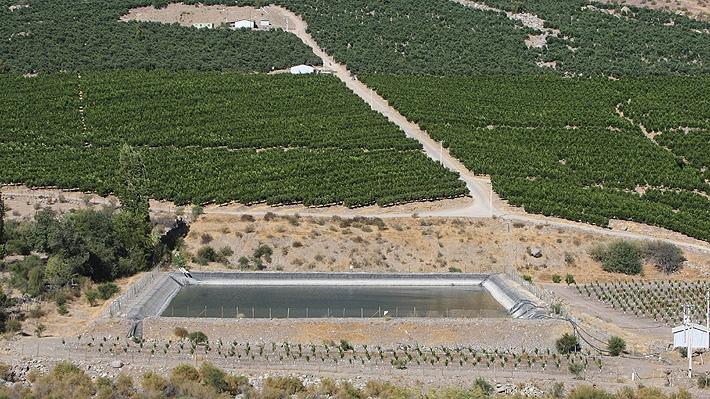 Producción de paltas divide a Petorca: Activistas culpan a empresarios por la sequía y gremio rompe el silencio