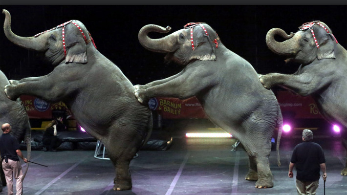 Público de un circo pasó el susto de su vida cuando elefante cayó sobre un palco