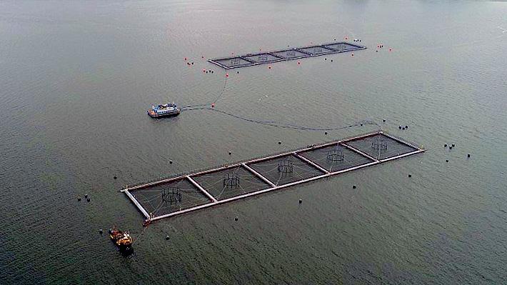 """SalmonChile califica de """"inédita"""" la fuga de salmones en Calbuco y empresa entrega balance de proceso de recaptura"""