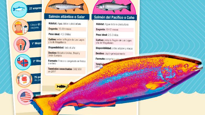 Fuga de peces en el sur de Chile: Las cifras del mercado salmonero del país