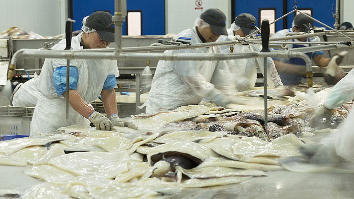 Industriales de la jibia alertan 900 despidos si se aprueba ley que los excluye de la actividad