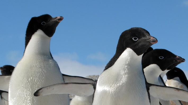 Con osos polares y pingüinos, ¿cómo enfrenta la ola de calor el zoo de Berlín?