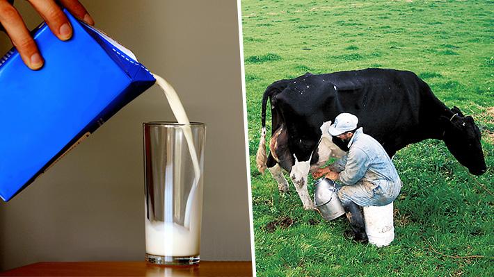 Nacionalismo, precios y colusión: Las disputas entre las empresas del mercado de la leche en Chile