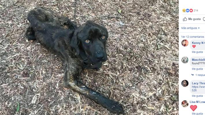 EE.UU.: Mujer intentó matar de hambre al perro de su ex luego de que este terminara con ella