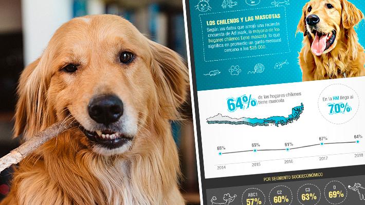 Radiografía a las mascotas en Chile: El 64% de los hogares tiene al menos una y la mayoría prefiere perros
