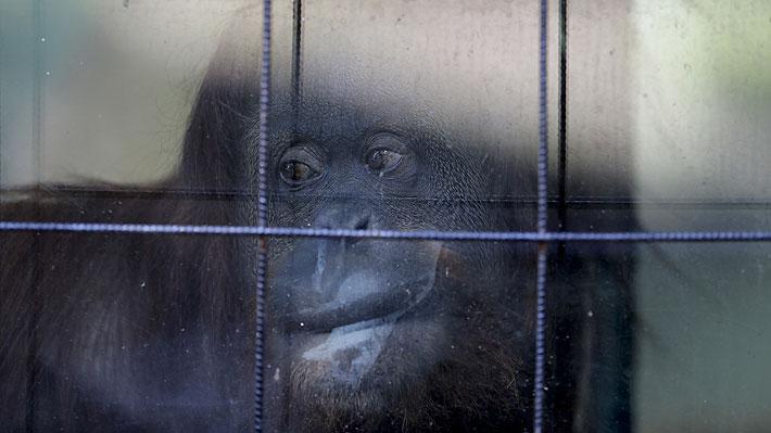 Más de mil animales han muerto en el ex zoológico de Buenos Aires en los últimos seis años