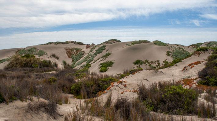 Tribunal Ambiental de Santiago autoriza la detención de las faenas de extracción de áridos en dunas de Ritoque