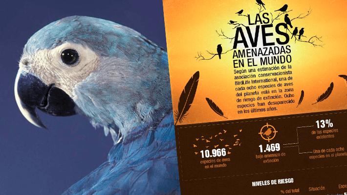 El 13% de las especies está bajo amenaza: El frágil presente de las aves del mundo