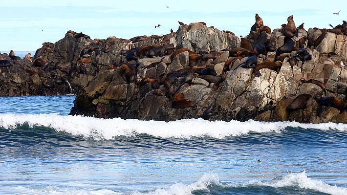 Comisión Ambiental de Ñuble rechaza de forma unánime proyecto de cultivo acuícola en Cobquecura