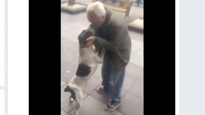 Video: El conmovedor momento en que un perro y su dueño se reencuentran después de tres años