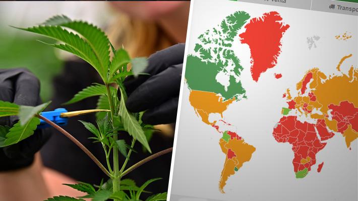 El mapa mundial de la marihuana: En qué países es legal, está despenalizada o prohibida