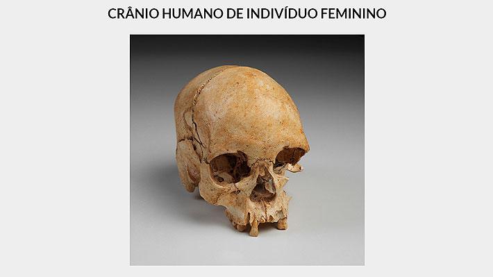 Es una de las joyas del recinto: Confirman hallazgo del cráneo de Luzia entre los escombros del incendiado Museo de Río